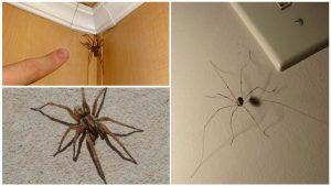 Как избавиться от паутины в доме
