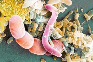Бактерии и перенос микробов